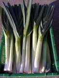 Lauch grün Stück = ca. 300 Gramm  Kg = Fr. 5.50