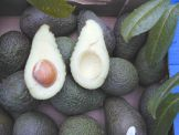 Avocados Hass, essreife Früchte.  Stück = Fr. 2.90