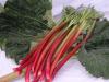 Rhabarbern rotfleischig (Erdbeer-Rhabarbern) Stk à ca. 150g (Kg = Fr. 11.50