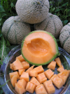 Netz-Melonen Cantalupe  Stück = ca. 600 = Fr. 5.00