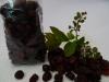 Cranberries, getrocknete Preisebeeren offen   100 Gramm = Fr. 2.20