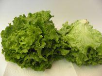 Battavia- Salat Stück mittelgross ca. 350 Gramm