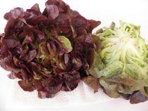 Eichblattsalat rot  Stück à ca 350 Gramm  Stück =  Fr. 2.80