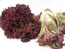 Lollo rot: Knackig frisch. Gute Salatsorte mit Geschmack, Fülle und Biss. Bringt Farbe, Dekoration und  Volumen in gemischten Salat. Stück à ca. 200 Gramm