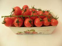 Cherry Tomatenam Zweig Schale à 500Gramm (100g = Fr. 1.20)
