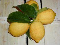 Zitronen unbehandelt BIO Wunderbare, gesunde Früchte aus Sizilien und Napoli. Gut geeignet zum Backen, Kochen, für Desserts, Limonaden, Drinks  oder Tee. Die Schale kann verwendet werden.