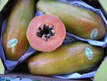 Papayas Jumbo  Wunderbare, grosse Früchte. Aromavolles, sehr gut verdauliches, orangefarbenes Fruchtfleisch mit viel Geschmack.